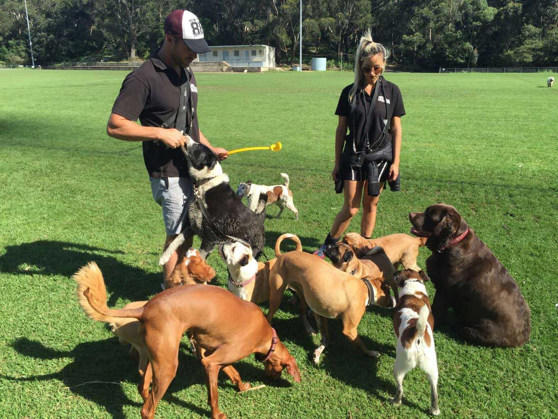 Dog Walker, Dog Walking Services, Dog Walking Sydney, Dog Walker Sydney, Dog Day Care Sydney, Doggy Day Care Sydney, Dog Walking, Dog Walking Brisbane, Dog Walker Brisbane, Doggy Day Care Brisbane, Dog Day Care Brisbane, Dog Walking Gold Coast, Doggy Day