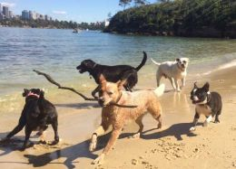 Dog walking on Sirius Cove, Dog Walker, Dog Walking Services, Dog Walking Sydney, Dog Walker Sydney, Dog Day Care Sydney, Doggy Day Care Sydney, Dog Walking, Dog Walking Brisbane, Dog Walker Brisbane, Doggy Day Care Brisbane, Dog Day Care Brisbane, Dog Wa
